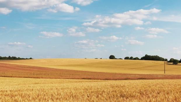 Agriculture : un nouveau label pour favoriser l'innovation